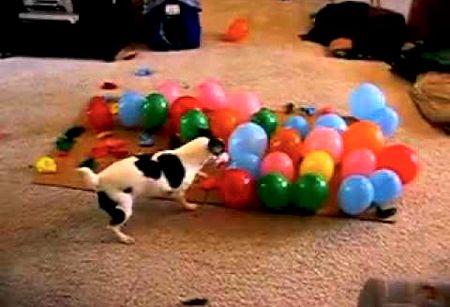 Детские песни про воздушные шарики скачать