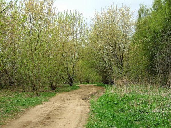 через Кузьминский парк.