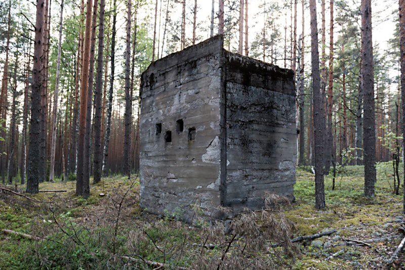 Фото: М. Брагин/n-svirsky.ru