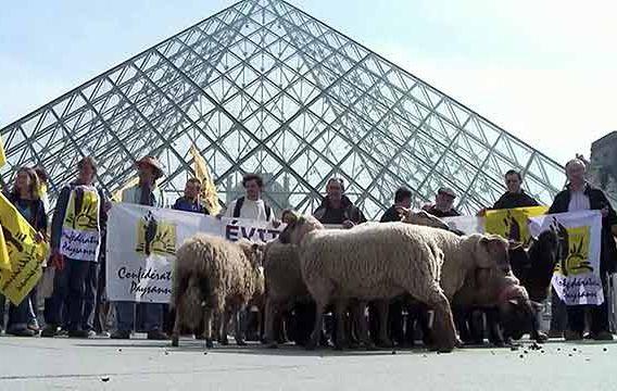 Единая сельскохозяйственная политика Европейского союза (GAP): немецкие и французские фермеры хотят бороться вместе