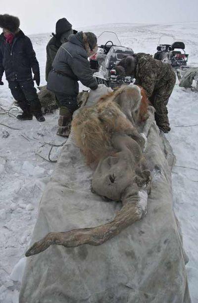 высушивания лица искатели мамонтов в якутии фото продуваемый